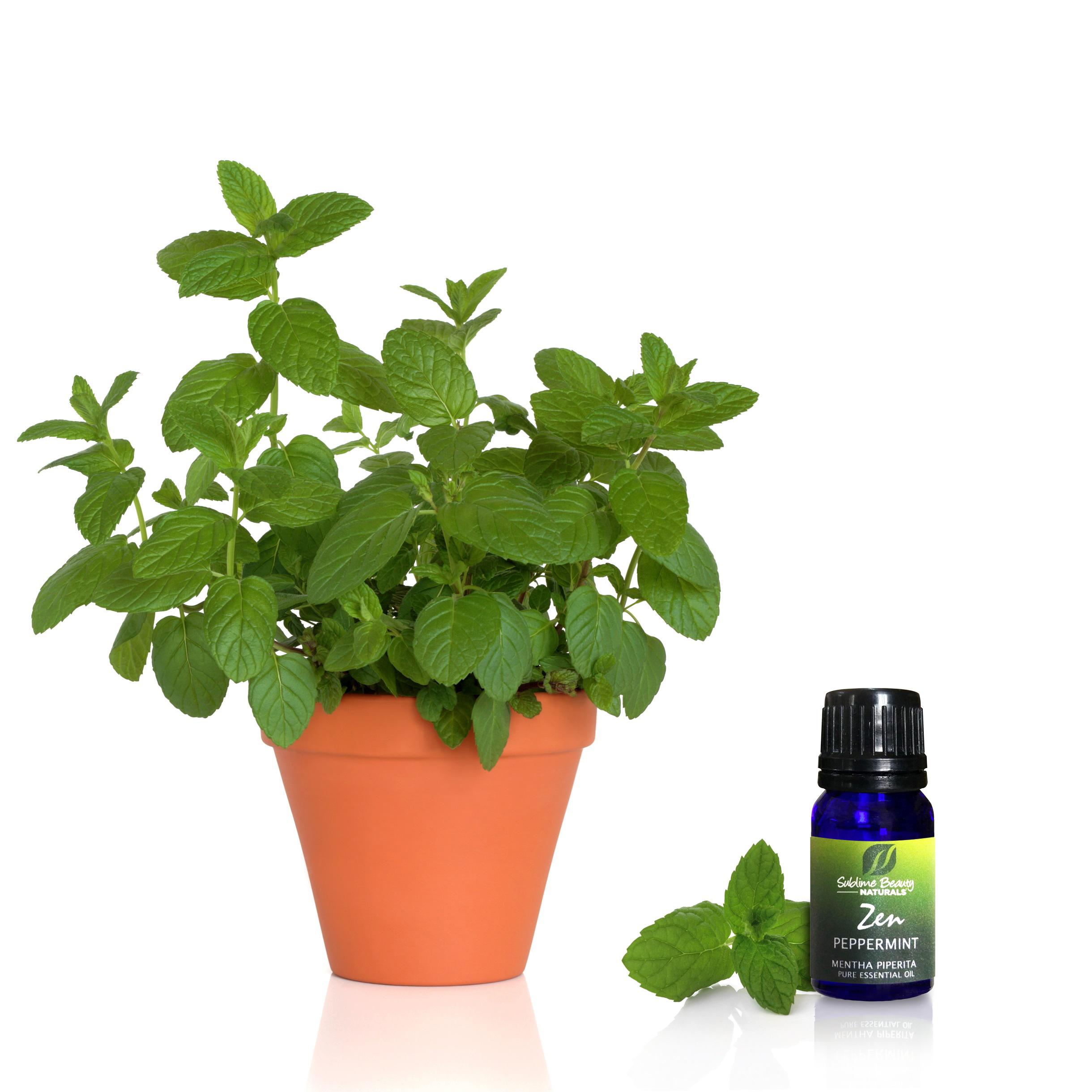 Mint Herb Essence
